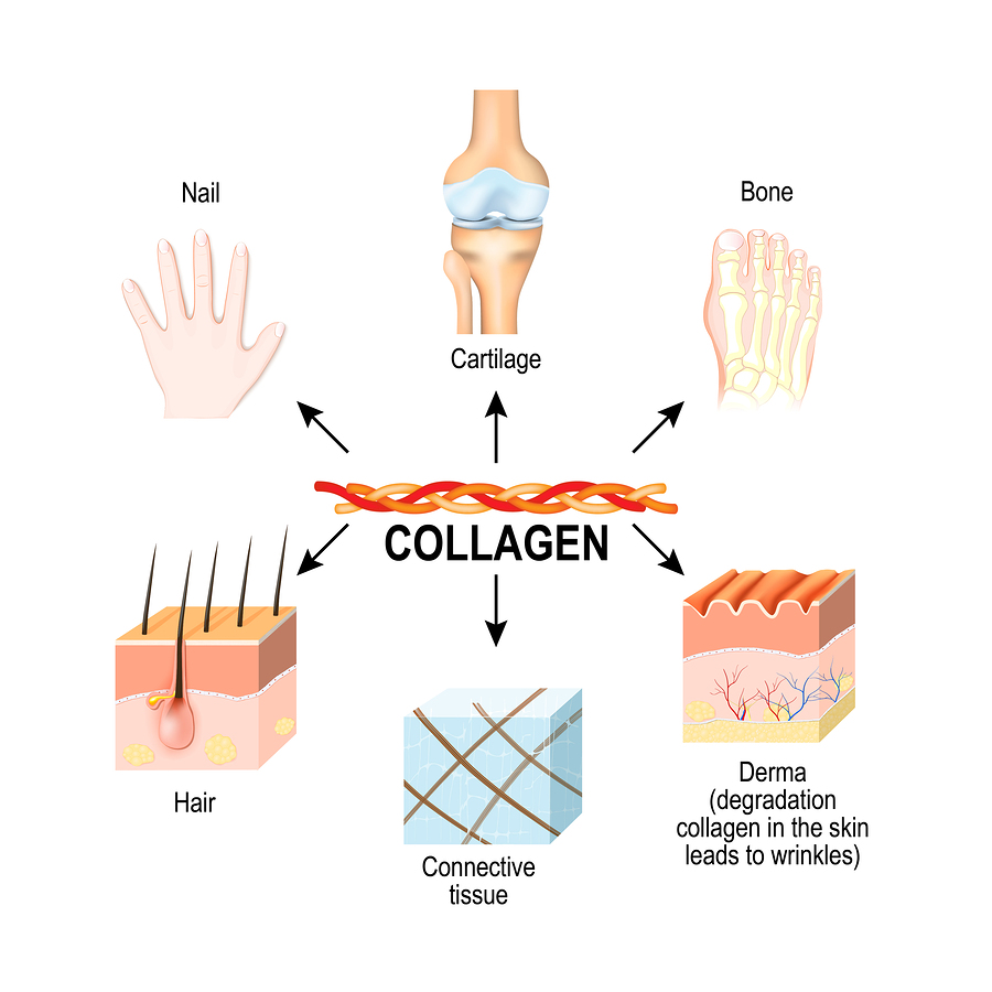 Image result for What is Collagen?
